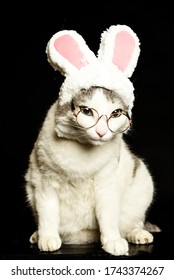 Cat dressed clothes and glasses is in studio