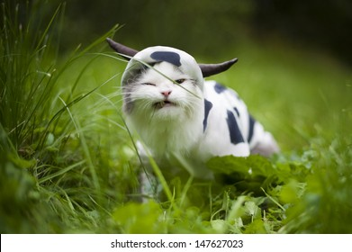cat dressed as a cow eats grass