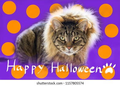 A cat dressed up like a lion with Happy Halloween handwriting. Conceptual image for Halloween.