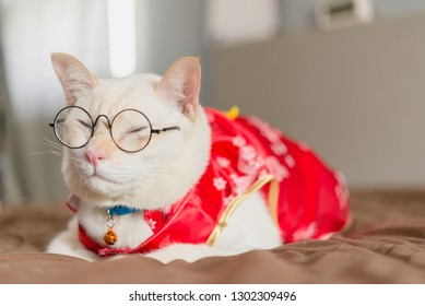 Cat dressing Chinese red suit,Cat wear qipao for chinese new year day.