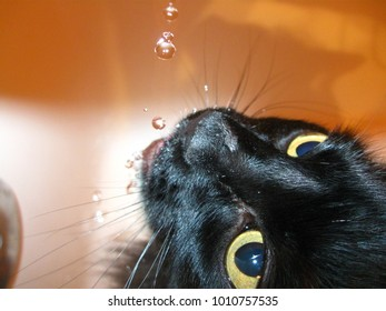 Cat drinking from a faucet.