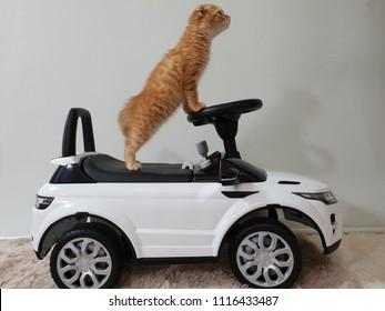 cat drive car