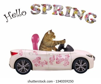 The cat drives a car painted with beautiful pink flowers. Hello spring. White background. Isolated.