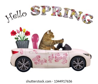 The cat drives a car painted with beautiful pink flowers with a basket of roses and tulips. Hello spring.
