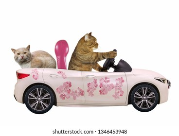 The cat drives a car painted with beautiful pink flowers with a passenger. White background. Isolated.
