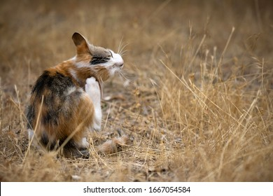 Cat in the dry grass itching