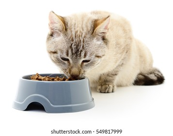 Cat eating dry food on white background.