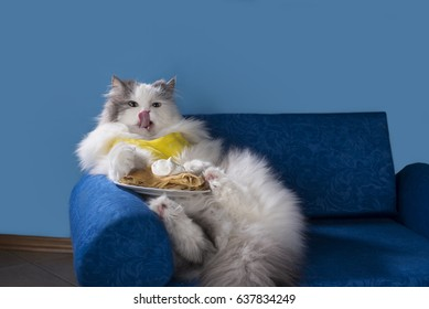 Cat eating pancakes lying on the couch
