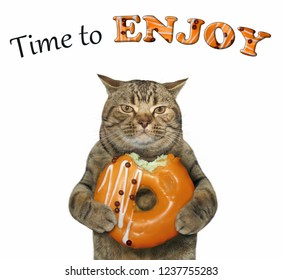 The cat eats a apricot doughnut. Time to enjoy. White background.