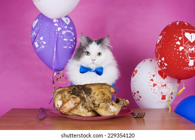 cat eats grilled chicken on a background of colorful balloons