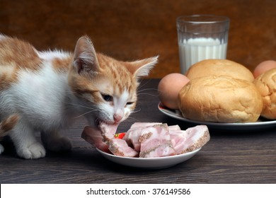 The cat eats ham, sausage. Large muzzle kitten. Cat eating pieces of sausage saucers. On the table, bread, a glass of milk. Big Cat Muzzle