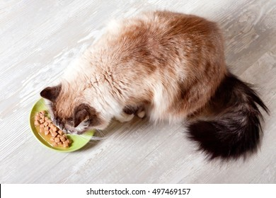Cat eats from a plate canned food.view from above