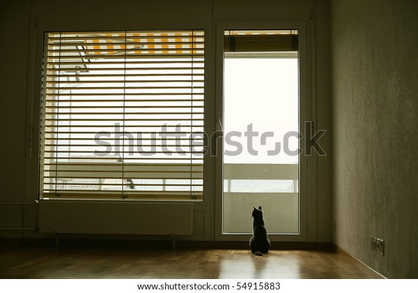 cat in empty rood