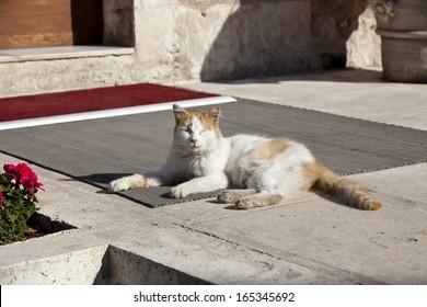 A cat enjoys the warm autumn sun