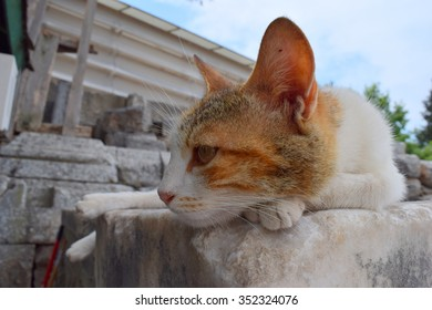 A cat in Ephesus 1