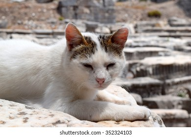 A cat in Ephesus 2