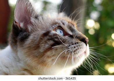 Cat exploring