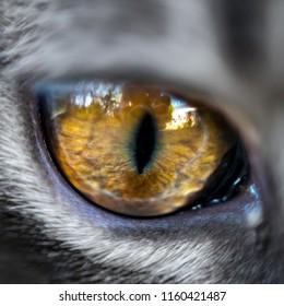 Cat eye in close up
