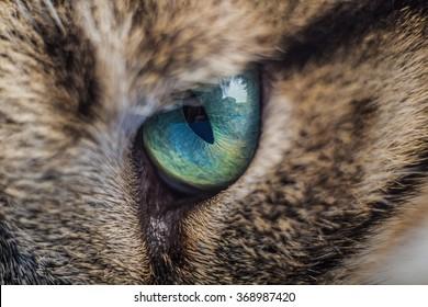 Cat eye.Macro shoot of cat eye