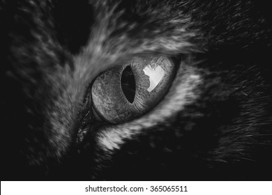 Cat eye.Macro shoot of cat eye in black an white.