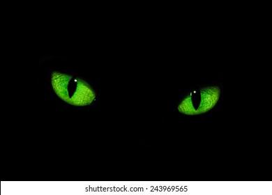 Cat eyes in the dark