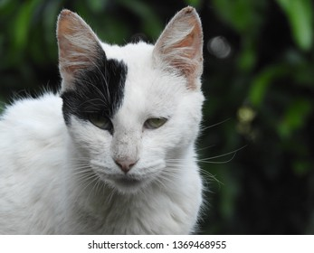 cat with face half white and half black