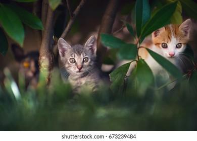Cat family in the garden