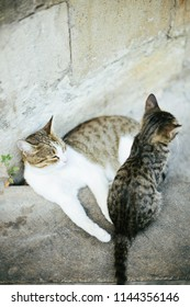 Cat family: mother cat and kitten lie together on old stone wall background in old town Baku