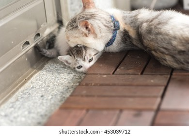cat family with mother play with her child
