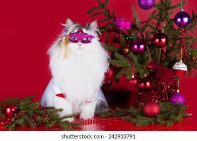 Latex Cat /& Dog Mask Pussycat Fancy Dress Feline Canine Animal Tabby Halloween