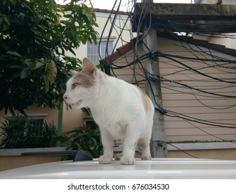 Cat fat