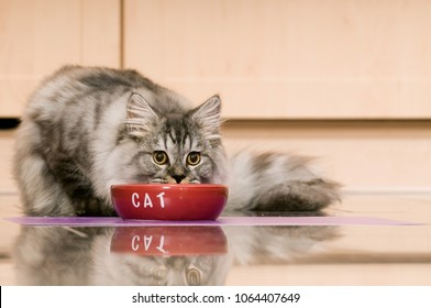 Cat is fed in the kitchen