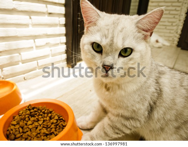 A cat and feed