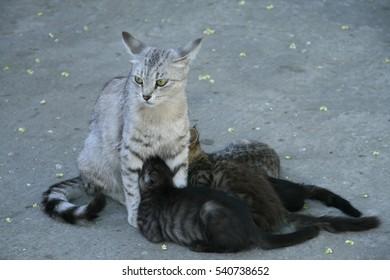 The cat feeds her kittens.
