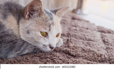 The cat is feeling lonely, The cat is sleeping on carpet
