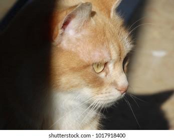 cat feline young