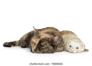 Cat and ferret lying on a white background