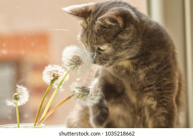 cat and fluffy dandelions