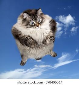 cat flying in blue sky