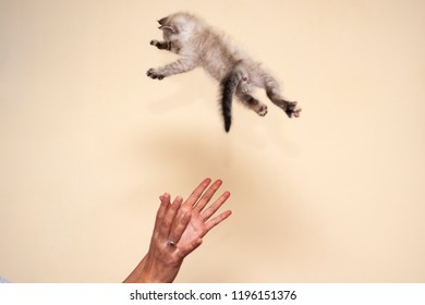 The cat is flying and is landing on her four feet.