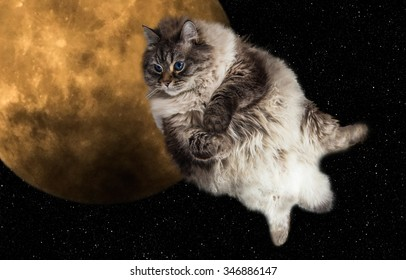 cat flying with the moon on background