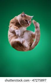 The Cat is flying on green space