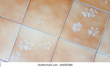 Cat footprint on the tile ground