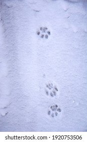 Cat footprints in the snow. Cat snow trail. The cat walked through the snow and left paw prints. Winter picture. Animals in winter.