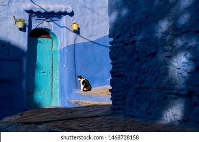 Cat in front of blue wall in Chefchaouen, Morocco