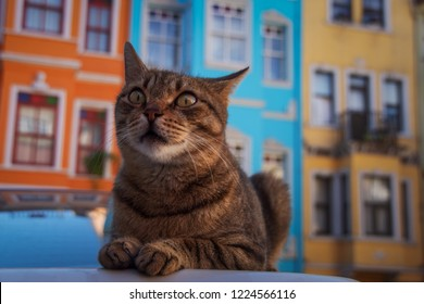 A cat in front of the colorful houses in balat