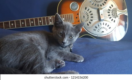 Cat in front of a country dobro guitar
