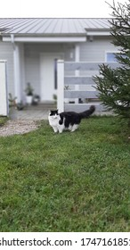cat in front of a house