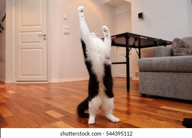 A cat in full stretch in a norwegian home