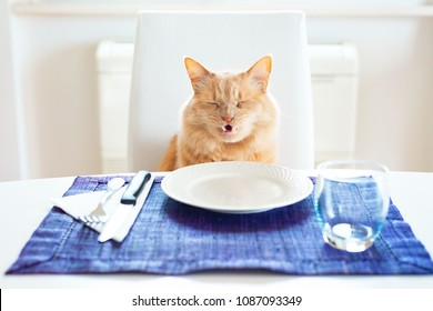 Cat with a funny angry expression because there is not food in the plate